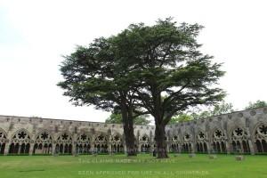 ソールズベリー大聖堂1