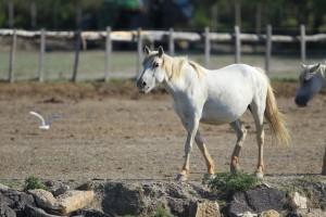 川岸の馬2