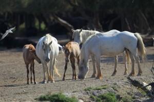 川岸の馬3