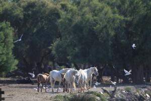 川岸の馬4