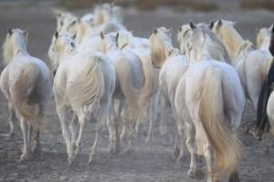 裸馬シーン4