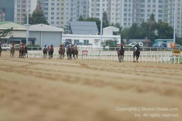 韓国カップ05