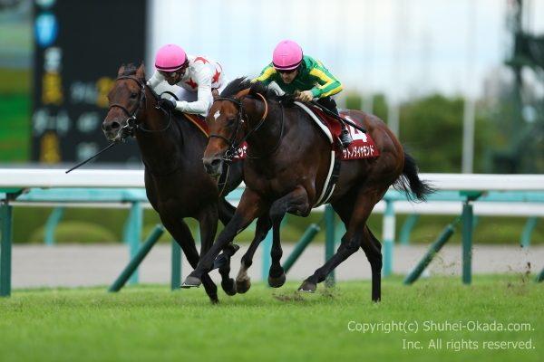 16神戸新聞杯3