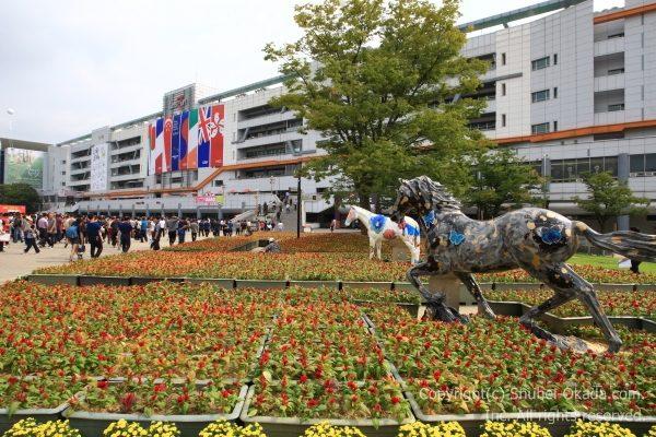 ソウル競馬場11