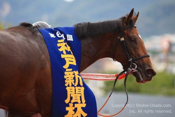 16神戸新聞杯7