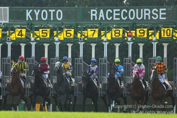 161113京都競馬場5