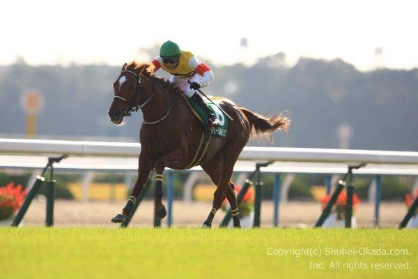 16京都ジャンプステークス2