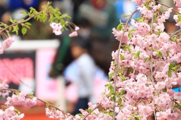 170409阪神イメージ3