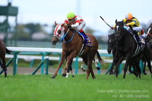 17桜花賞2