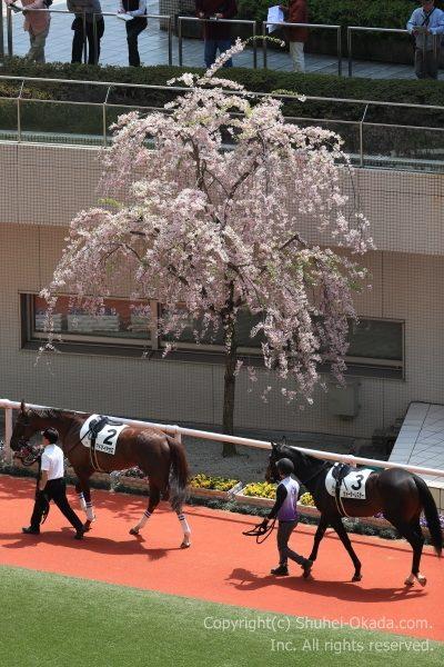 170415阪神イメージ1