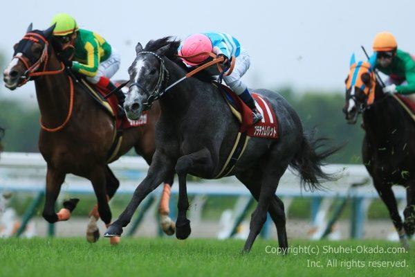 17京都新聞杯3