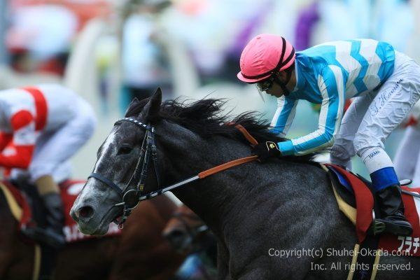 17京都新聞杯4