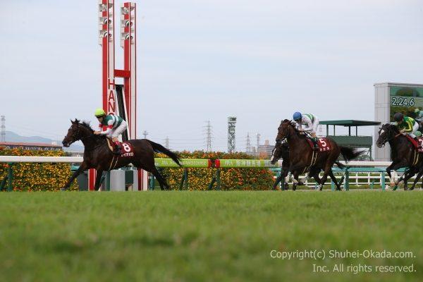 17神戸新聞杯5