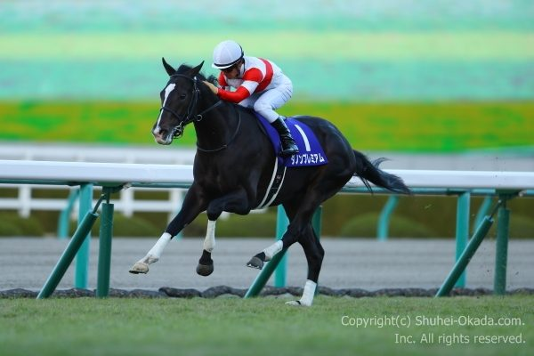 17朝日杯FS2